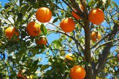 laranja-240x160.jpg