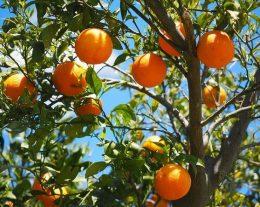 laranja-260x207.jpg